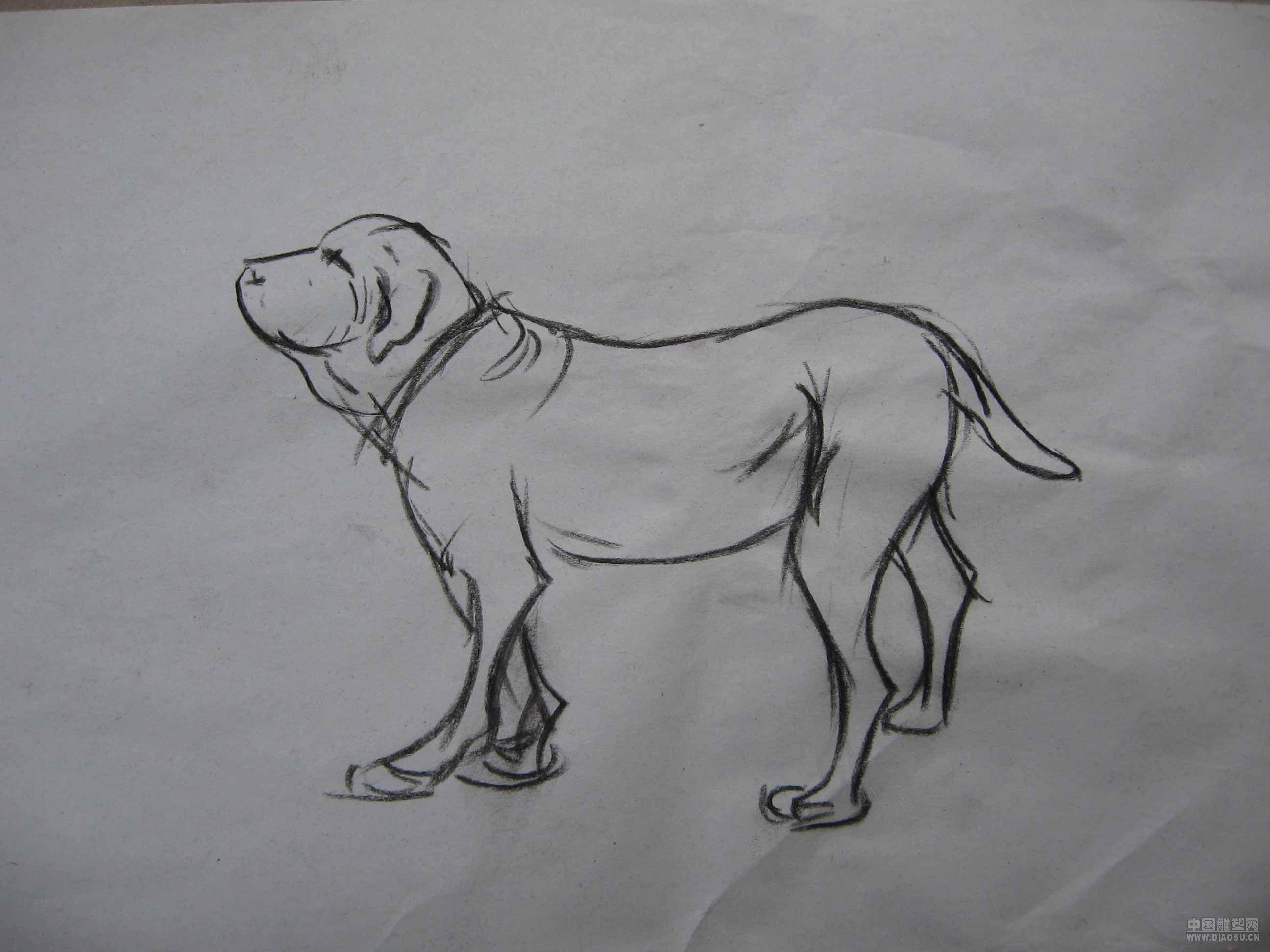 狗狗速写--liuyang的个人网站